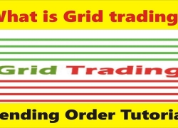 What is Grid trading? Pending order tutorial by Tani Forex in Urdu and Hindi